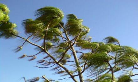 Varning för kraftiga vindar