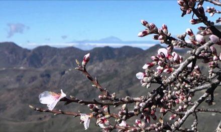 Tejeda firar mandelblomningen på lördag & söndag