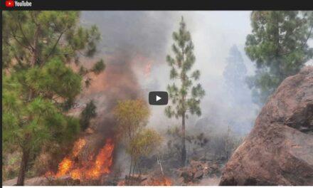Skogsbrand i Mogan