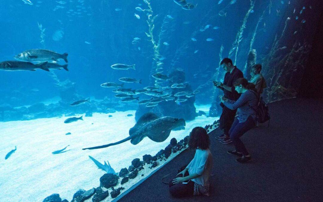 Nya öppettider Poema del Mar…