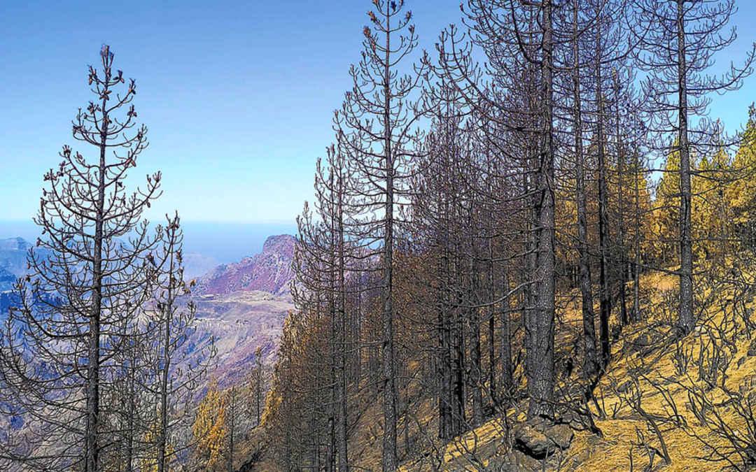 Vad händer med fjällvandringarna efter skogsbranden på Gran Canaria?