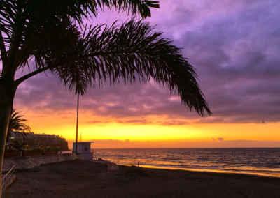 Palm i gryningen