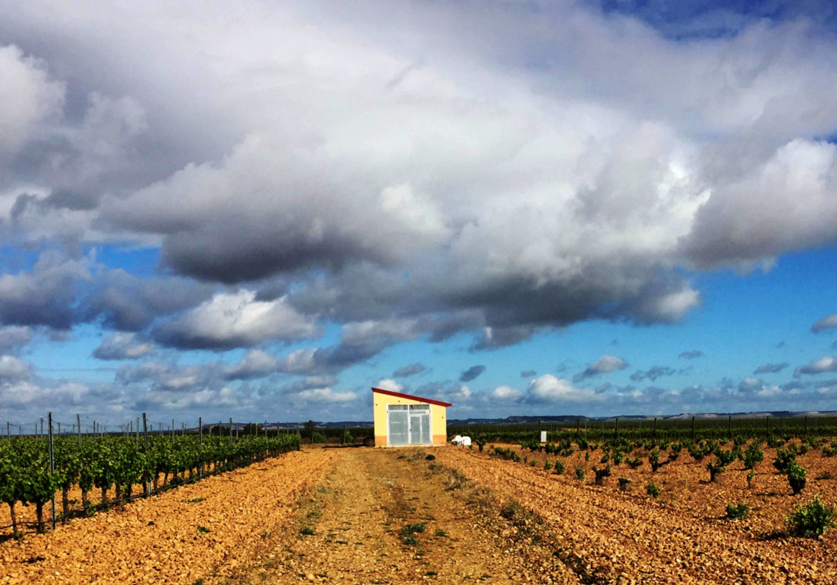 Ett spanskt vitt vin i världsklass?