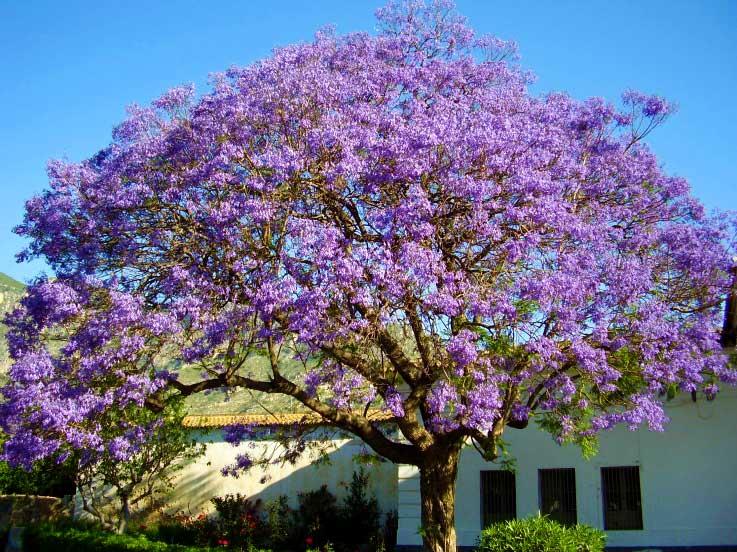 Trädet som befriar