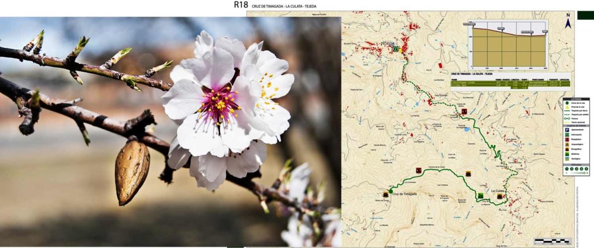 Blomma och karta