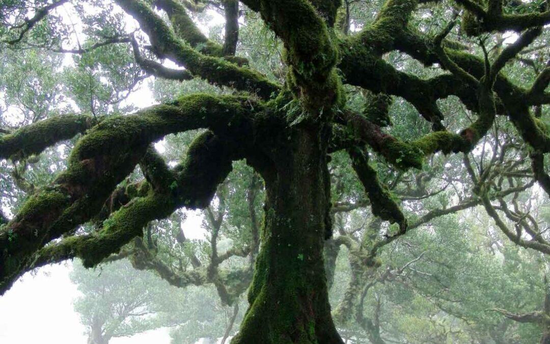 TILO treet
