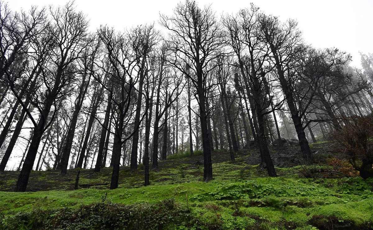 Brända träd